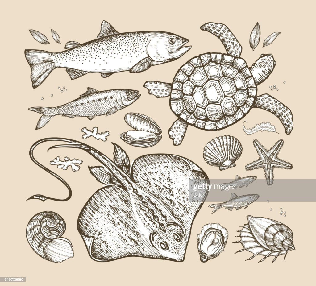 sea animals. hand-drawn sketches fish, trout, herring, turtle, stingray