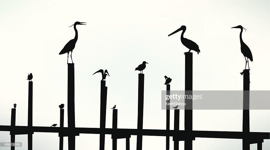 Sea Birds, Pelican, Seagull, Crane Background