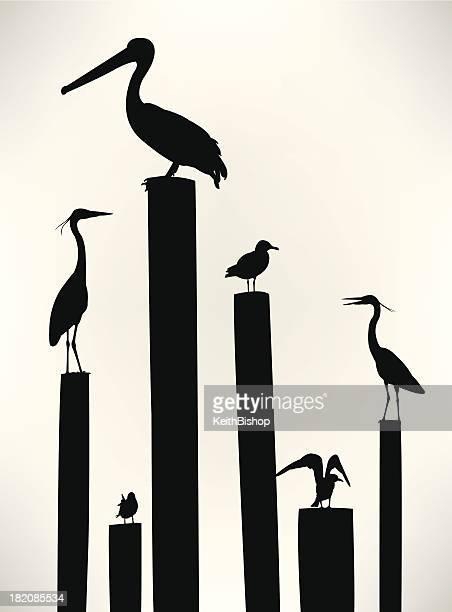 sea birds - seagull, pelican, crane - pelican stock illustrations