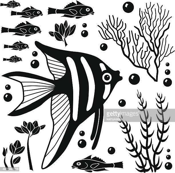 illustrations, cliparts, dessins animés et icônes de éléments de design des créatures de la mer - poissons exotiques