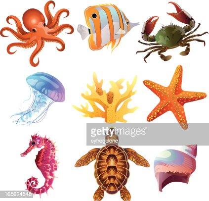 Sea Creatures Vector Art   Getty Images