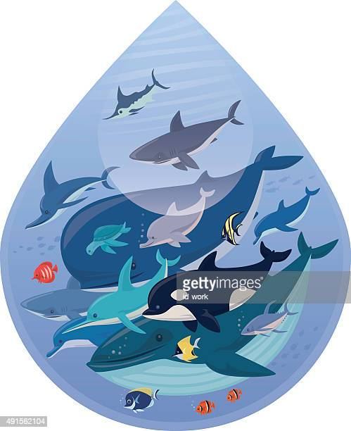 sea creatures - killer whale stock illustrations, clip art, cartoons, & icons