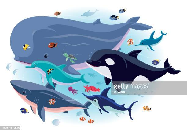 sea creatures with tropical fishes - killer whale stock illustrations, clip art, cartoons, & icons