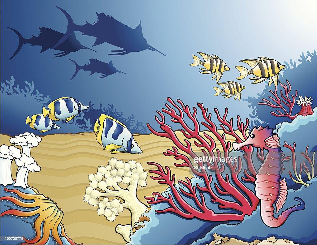 Sea fauna / Tropical fishes