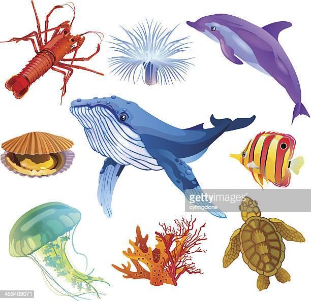 sea fauna - sea turtle stock illustrations