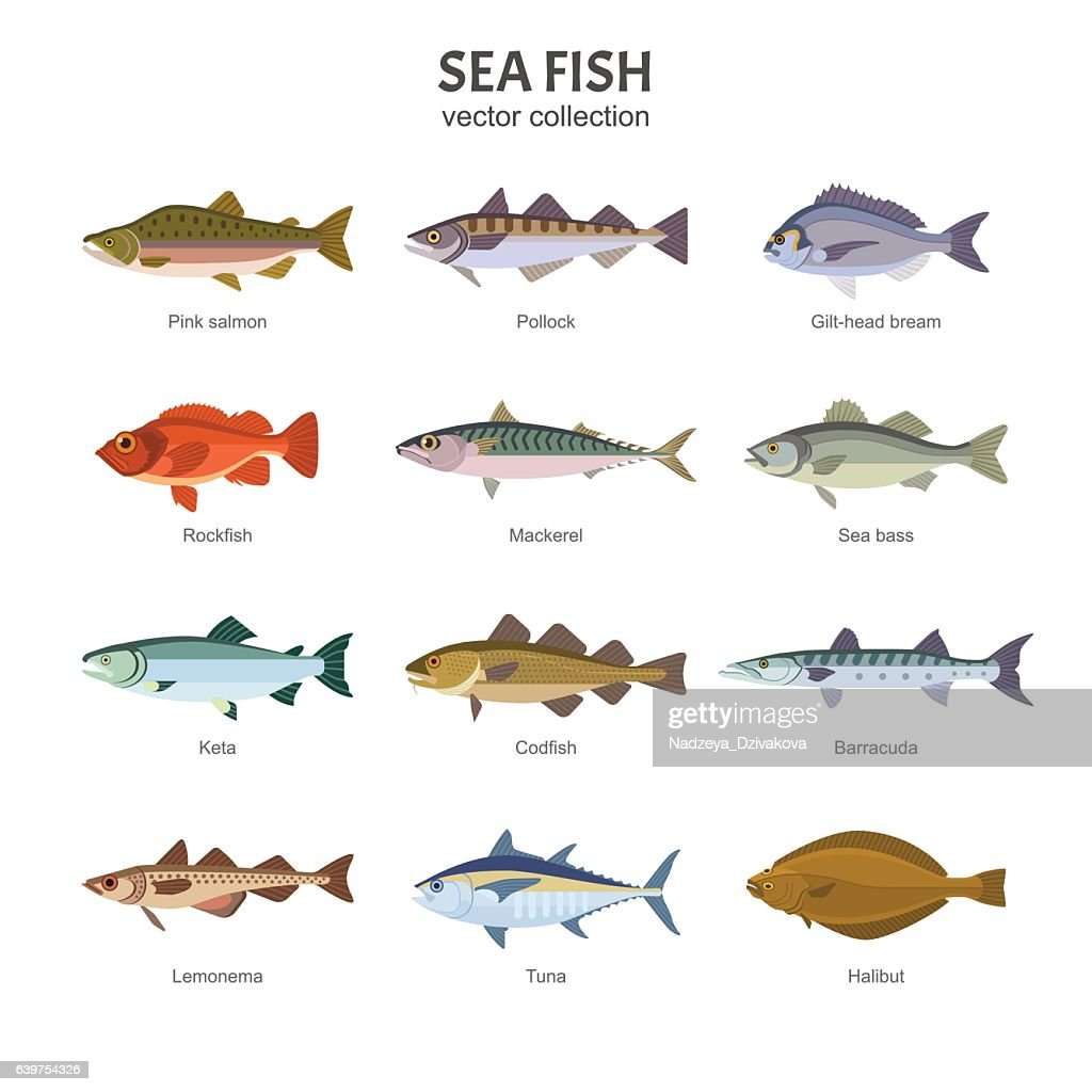 Sea fish vector collection.