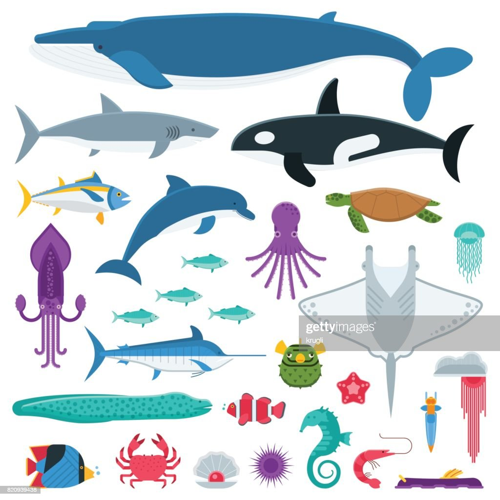 Sea Life and Underwater Animals and Fishes
