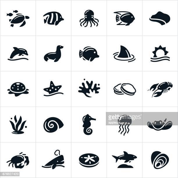 ilustraciones, imágenes clip art, dibujos animados e iconos de stock de iconos de la vida marina - concha de mar