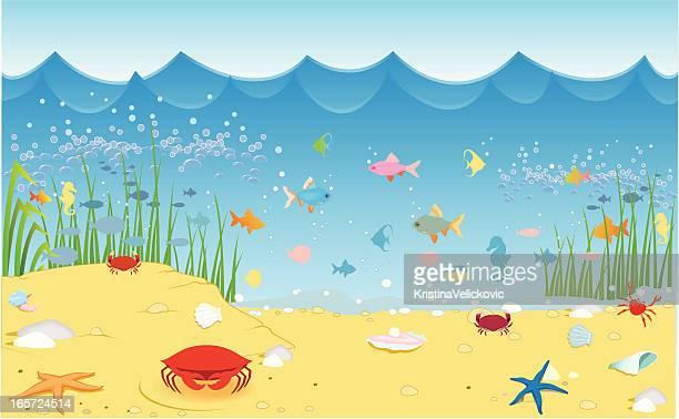 illustrations, cliparts, dessins animés et icônes de sea life - crabe