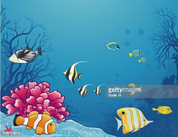 illustrations, cliparts, dessins animés et icônes de sea life / la vie sous la mer - id��e