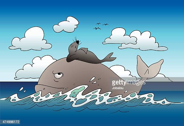 Sea lion travels on the whale back
