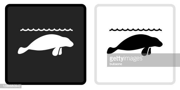 sea lions icon on  black button with white rollover - mammal stock illustrations