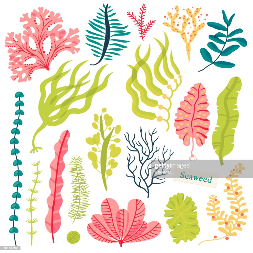 Sea plants and aquatic marine algae. Seaweed set vector illustration isolated on white