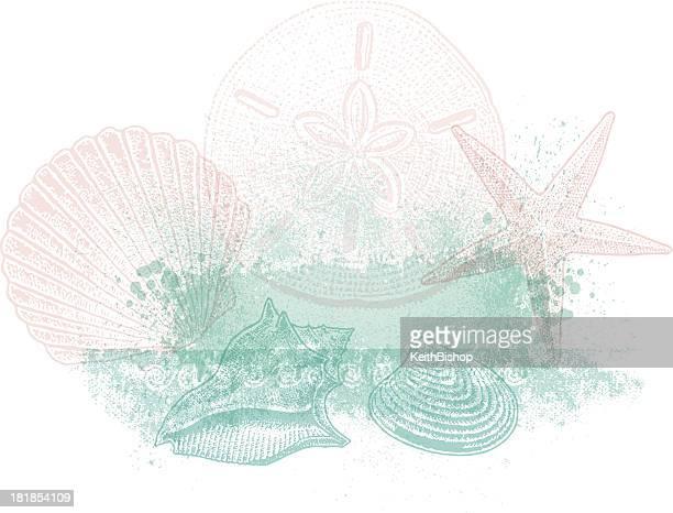 ilustraciones, imágenes clip art, dibujos animados e iconos de stock de carcasa de diseño de fondo del mar - concha de mar