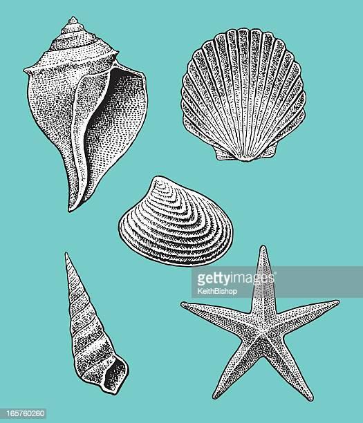 Sea Shell-Kollektion