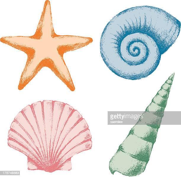 ilustraciones, imágenes clip art, dibujos animados e iconos de stock de carcasa al mar - concha de mar