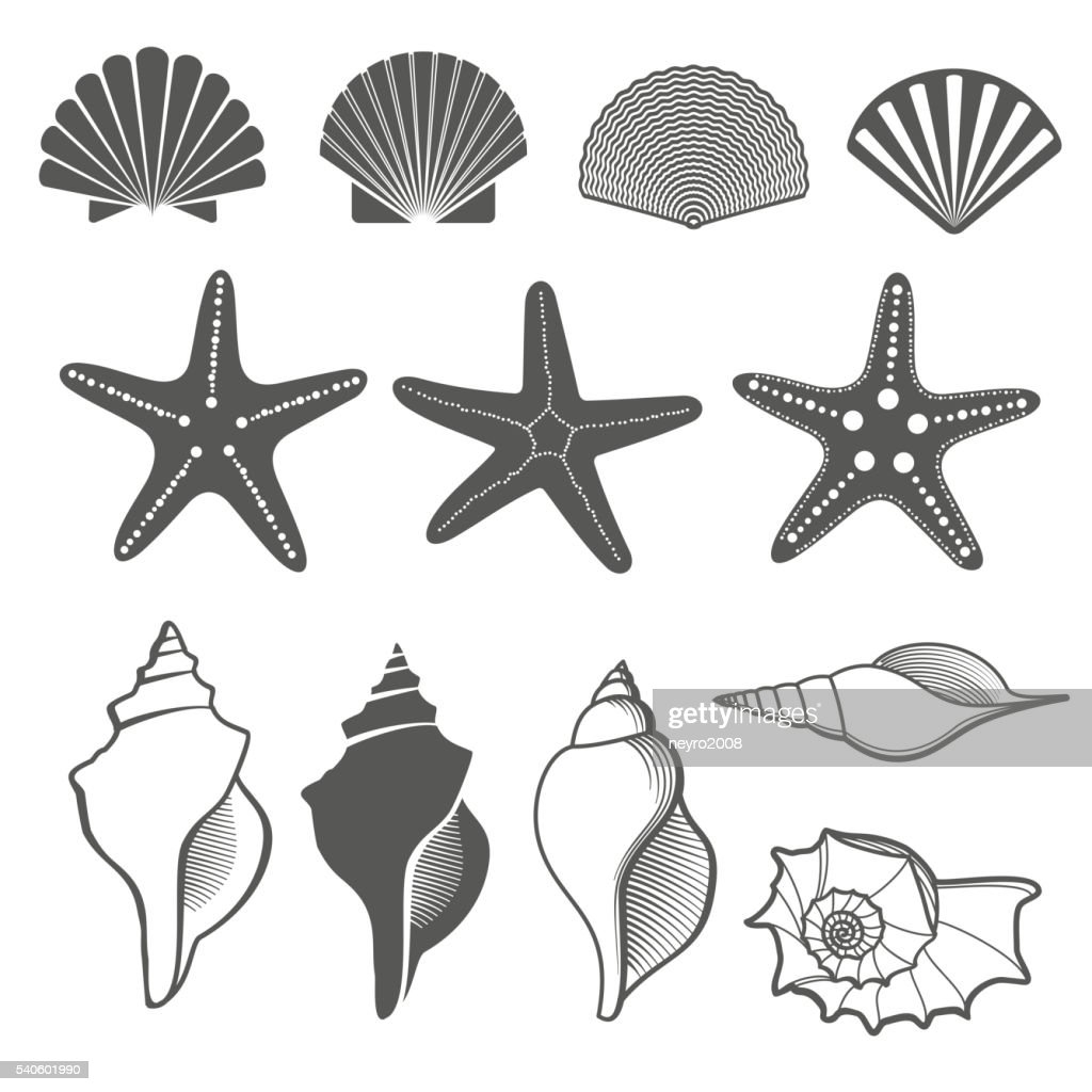 Sea shells and starfish vector set
