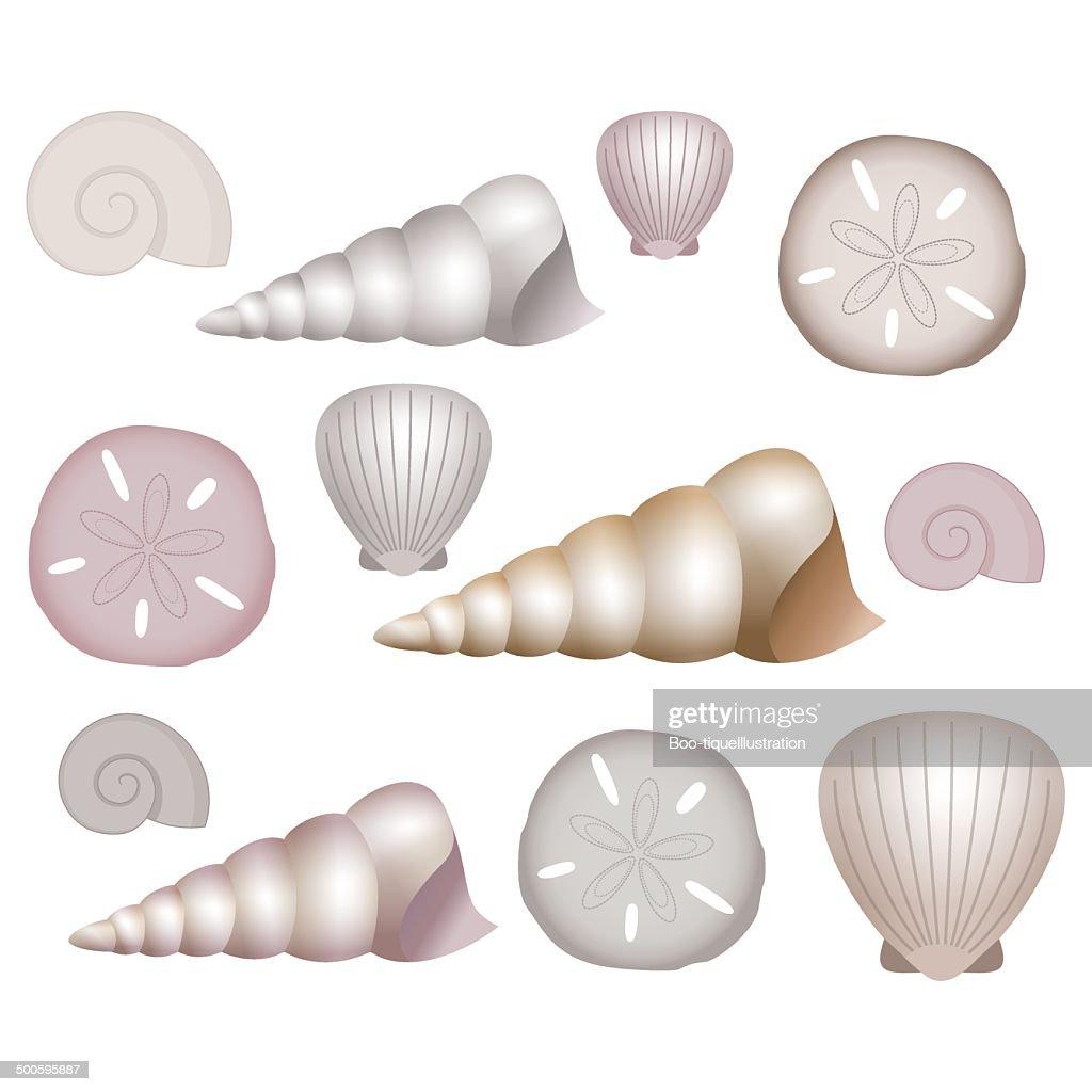 Sea Shells Illustrations.