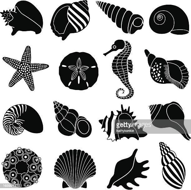 ilustrações de stock, clip art, desenhos animados e ícones de conchas do mar - cavalo marinho