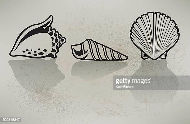 Sea Muscheln