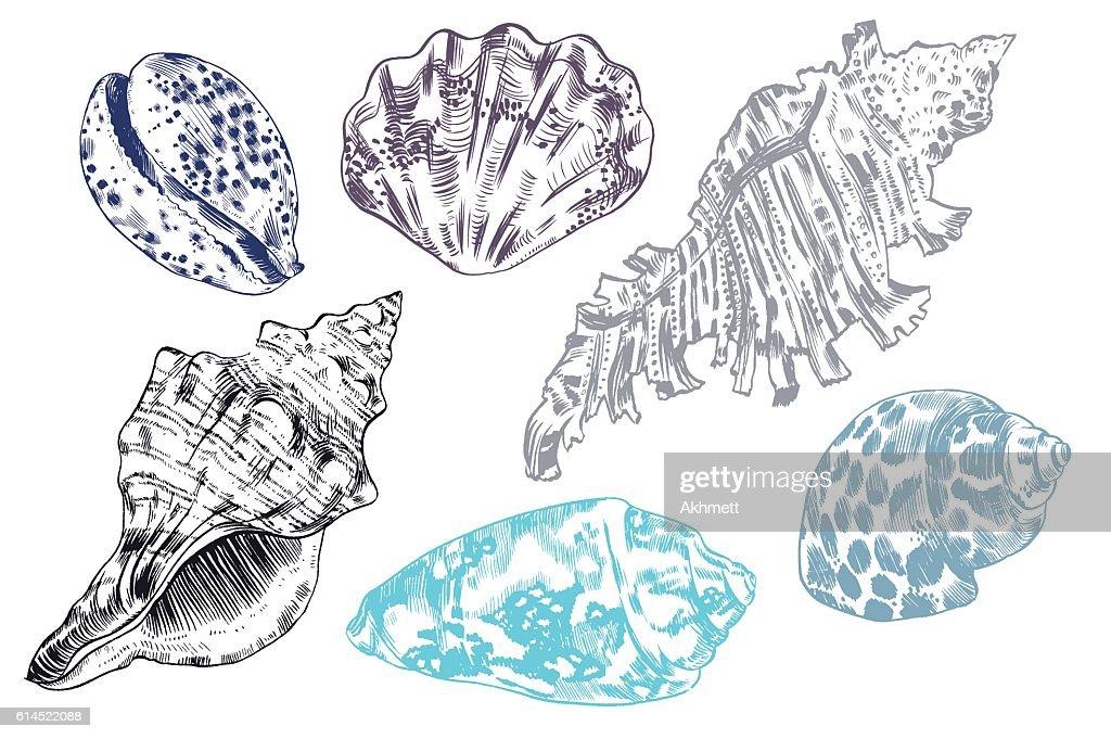 Sea shells vector monochrome illustration texture background
