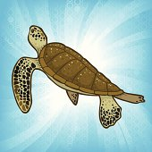 Sea Turtle Burst
