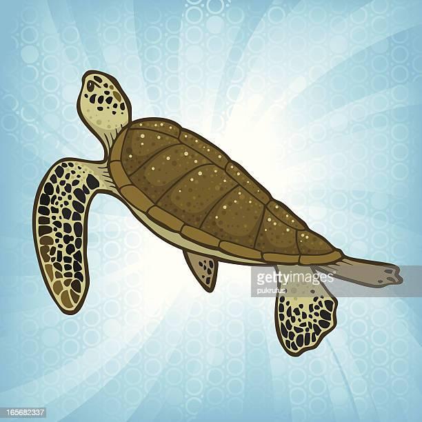 sea turtle burst - green turtle stock illustrations, clip art, cartoons, & icons