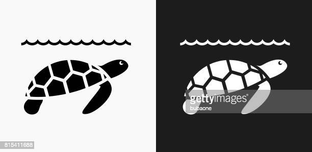 sea turtle icon on black and white vector backgrounds - turtle stock illustrations