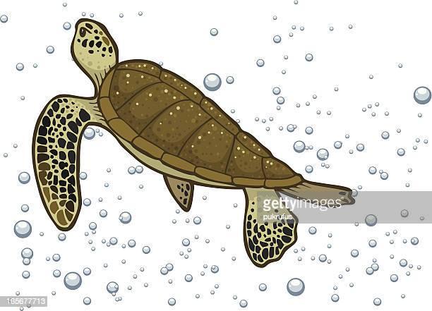 sea turtle in bubbles - sea turtle stock illustrations