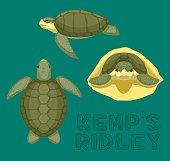 Sea Turtle Kemp's Ridley Cartoon Vector Illustration