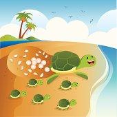 Sea turtle lay eggs