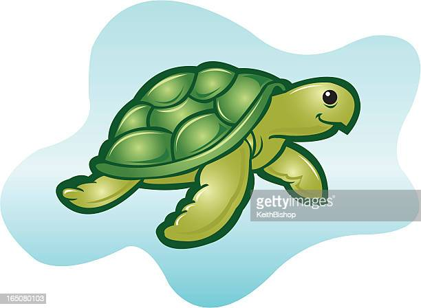 Sea Turtle or Tortoise Cartoon