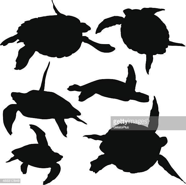 ilustraciones, imágenes clip art, dibujos animados e iconos de stock de tortuga de mar - tortugas