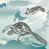 Sea Turtles Underwater