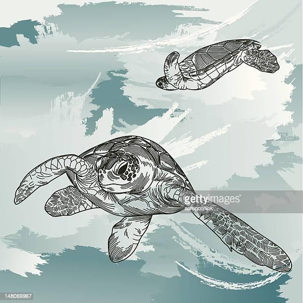 ilustraciones, imágenes clip art, dibujos animados e iconos de stock de tortugas de mar submarino - tortugas
