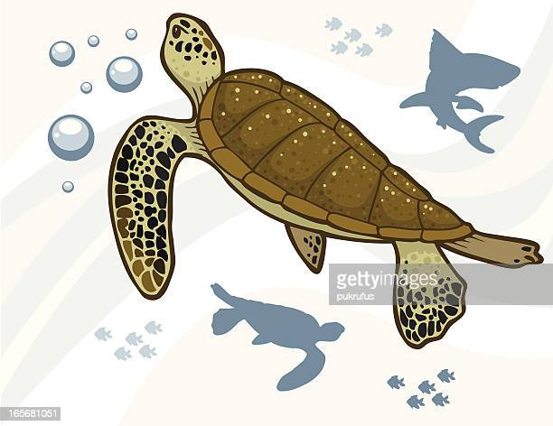 sea turtles - green turtle stock illustrations, clip art, cartoons, & icons