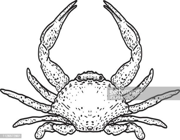 Seafood crab drawing