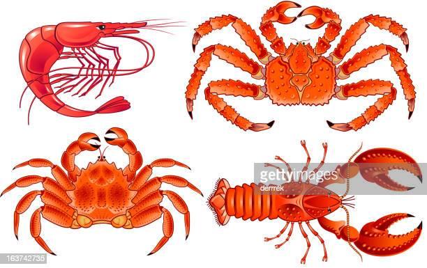 ilustrações, clipart, desenhos animados e ícones de camarão e lagostim de frutos do mar - camarões