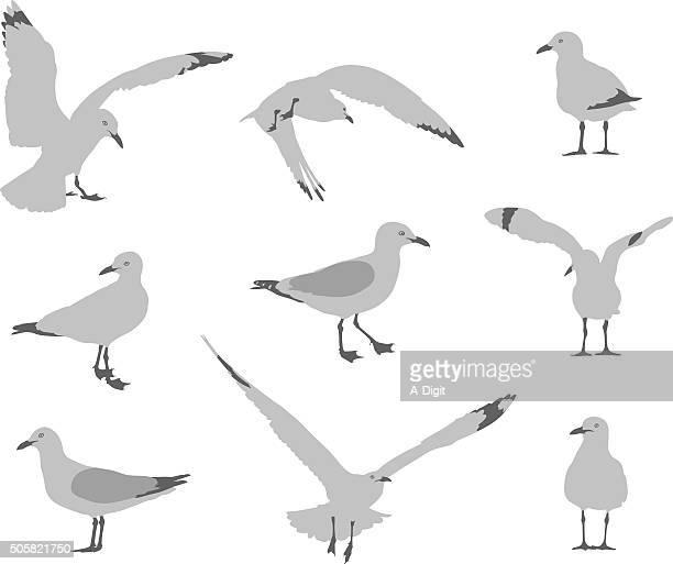 Seagull 行動