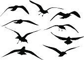 Seagull Silhouettes