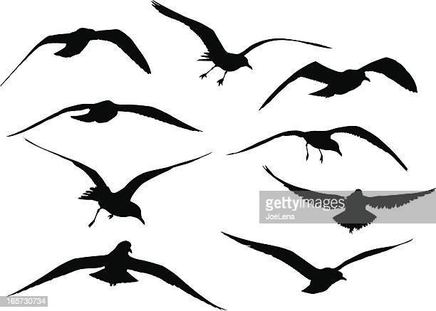 seagull silhouettes - seagull stock illustrations