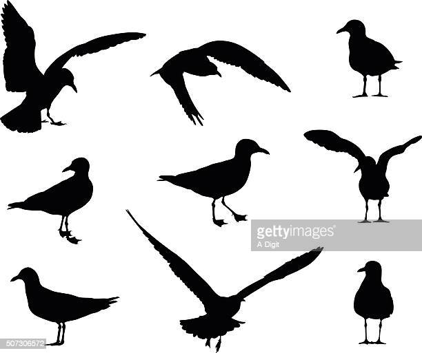 seagull silhouettes - webbed foot stock illustrations, clip art, cartoons, & icons