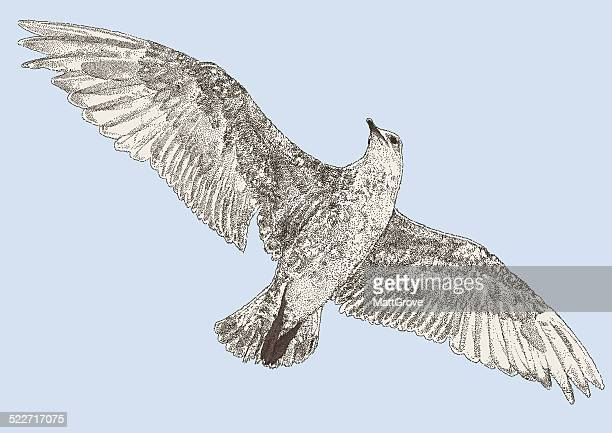 seagull - webbed foot stock illustrations, clip art, cartoons, & icons