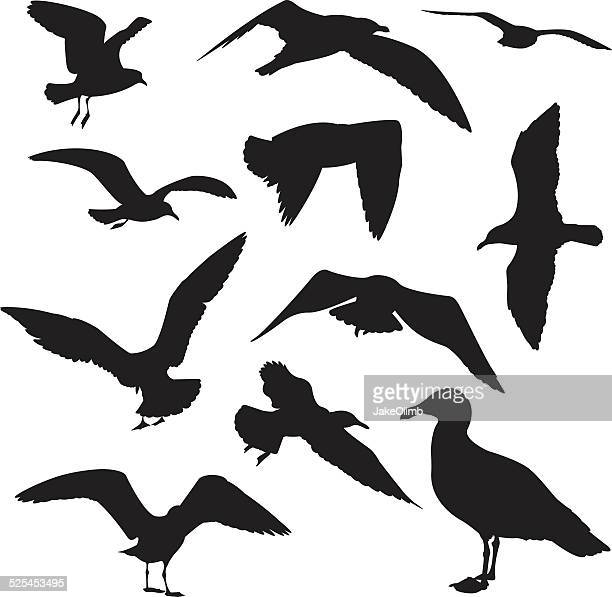 seagulls silhouette - webbed foot stock illustrations, clip art, cartoons, & icons