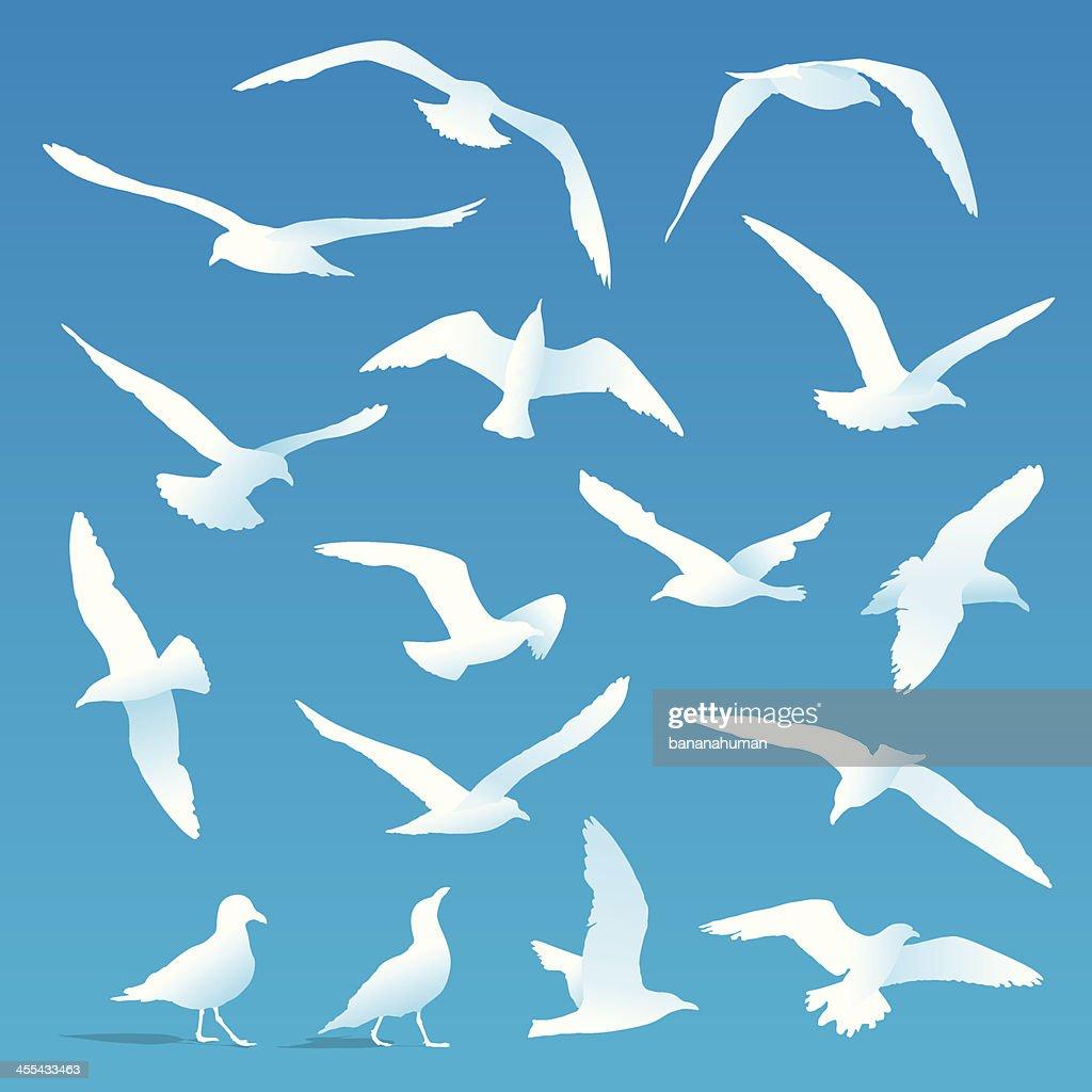 Seagulls : stock illustration
