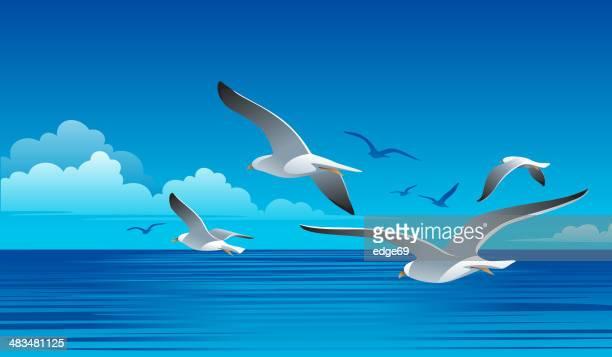 seagulls - seagull stock illustrations