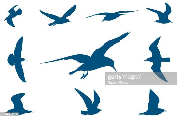 とかもめ  - 海洋性の鳥点のイラスト素材/クリップアート素材/マンガ素材/アイコン素材