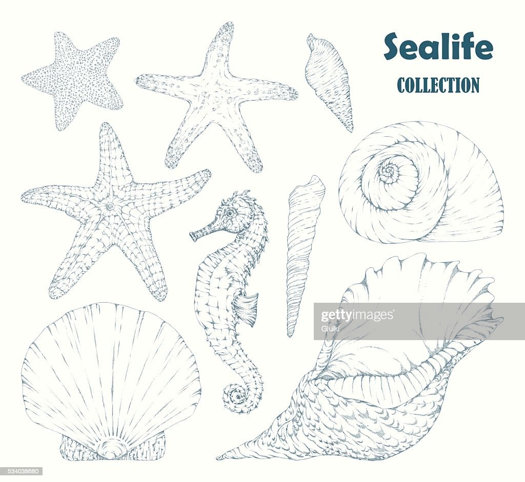 Sealife collection.