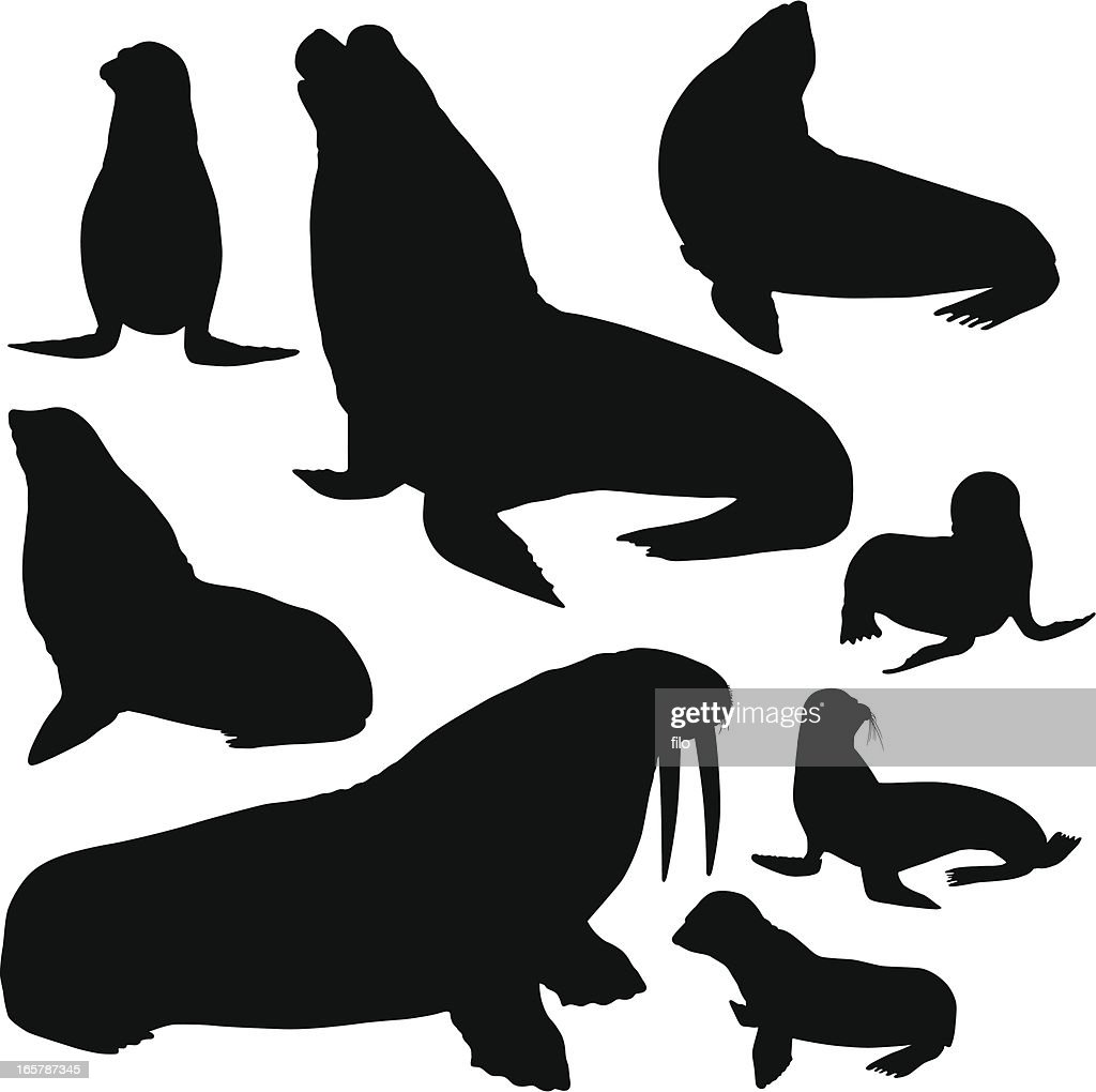 Seals, Sea Lions and Walrus Silhouettes