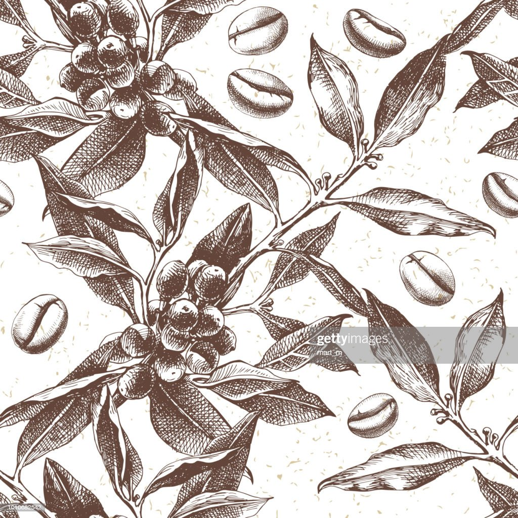 Seamles pattern with coffee plant and beans
